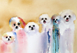 Bichon Ribbons