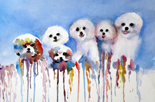 Bichon Ribbons Two